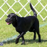 Dog Show Bermuda, October 24 2015-41