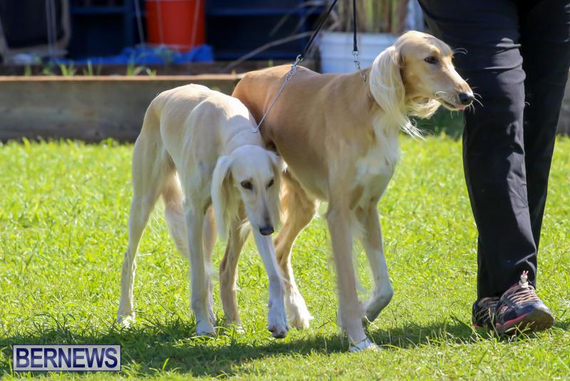 Dog-Show-Bermuda-October-24-2015-46