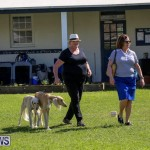 Dog Show Bermuda, October 24 2015-47