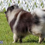Dog Show Bermuda, October 24 2015-48