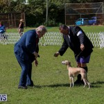 Dog Show Bermuda, October 24 2015-53
