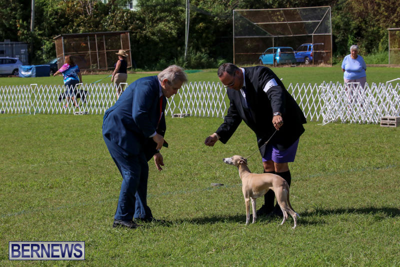 Dog-Show-Bermuda-October-24-2015-53