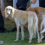 Dog Show Bermuda, October 24 2015-54