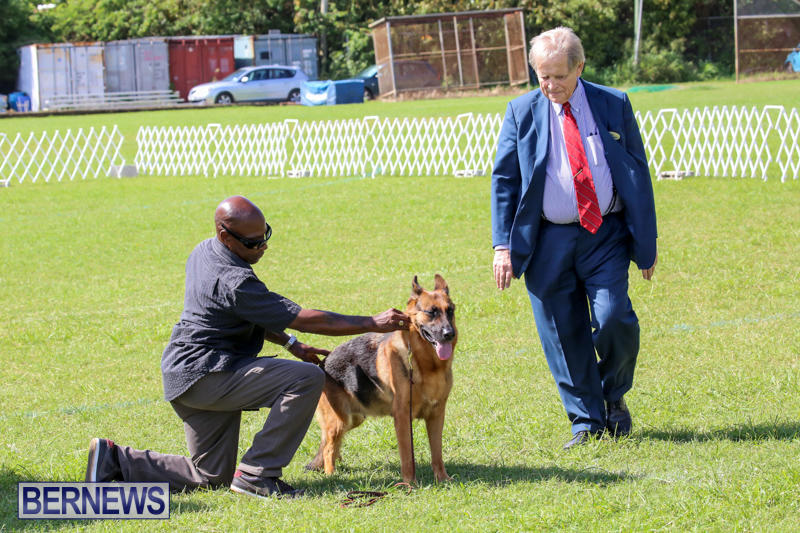 Dog-Show-Bermuda-October-24-2015-55