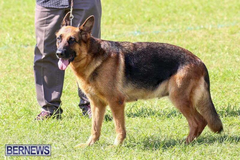 Dog-Show-Bermuda-October-24-2015-56
