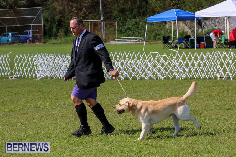 Dog-Show-Bermuda-October-24-2015-64