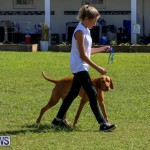 Dog Show Bermuda, October 24 2015-74