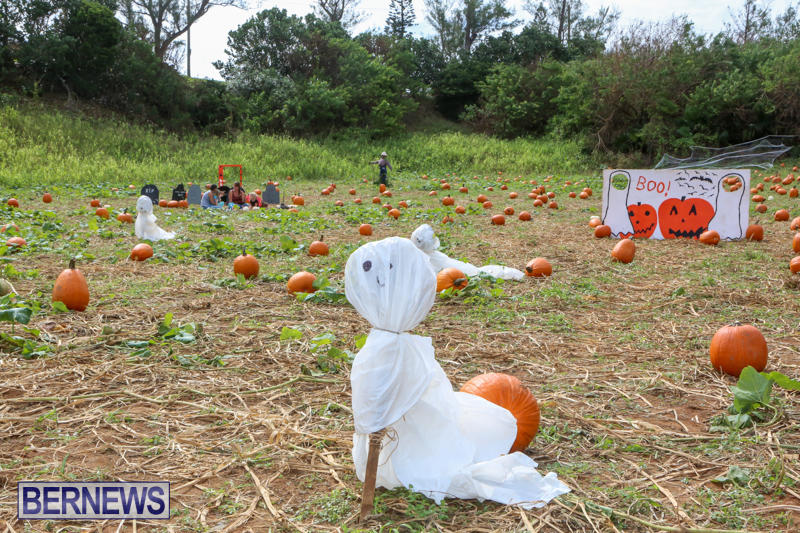 JJ-Produce-Pick-Your-Own-Pumpkins-Bermuda-October-23-2015-10