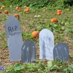 J&J Produce Pick Your Own Pumpkins Bermuda, October 23 2015-13