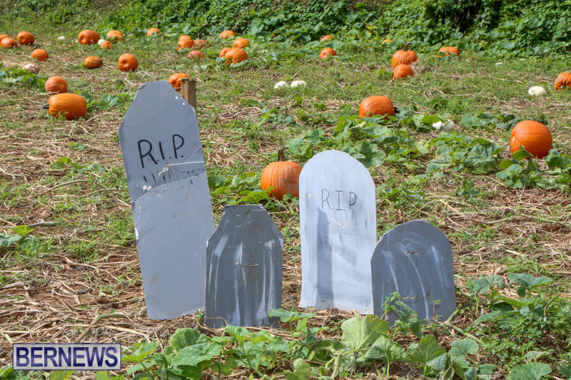 JJ-Produce-Pick-Your-Own-Pumpkins-Bermuda-October-23-2015-13