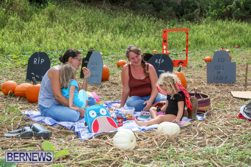 JJ-Produce-Pick-Your-Own-Pumpkins-Bermuda-October-23-2015-14