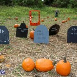 J&J Produce Pick Your Own Pumpkins Bermuda, October 23 2015-15