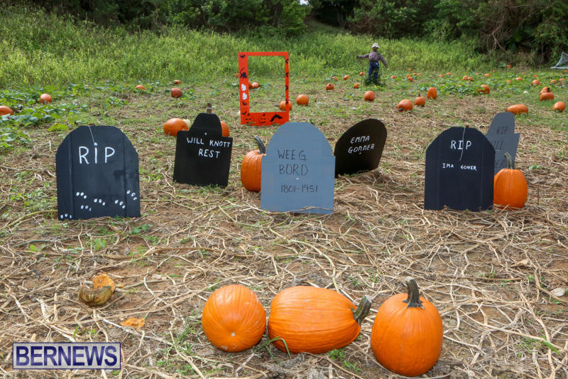 JJ-Produce-Pick-Your-Own-Pumpkins-Bermuda-October-23-2015-15