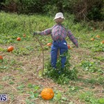 J&J Produce Pick Your Own Pumpkins Bermuda, October 23 2015-18