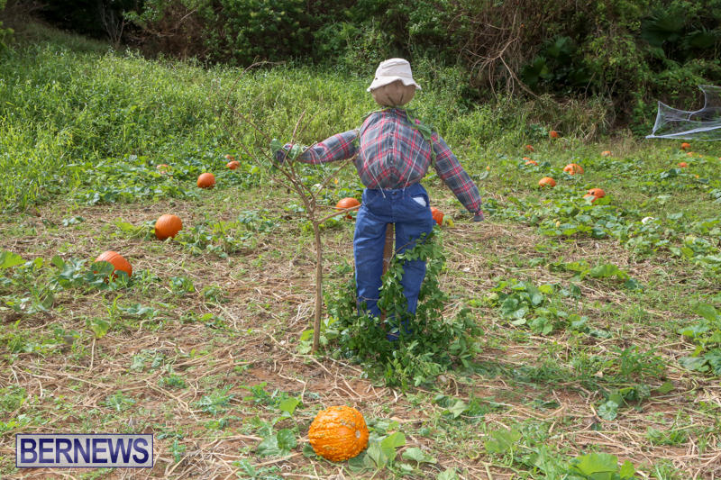 JJ-Produce-Pick-Your-Own-Pumpkins-Bermuda-October-23-2015-18