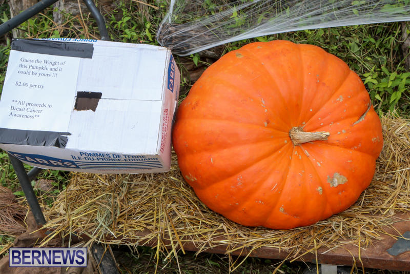JJ-Produce-Pick-Your-Own-Pumpkins-Bermuda-October-23-2015-2