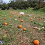 J&J Produce Pick Your Own Pumpkins Bermuda, October 23 2015-25
