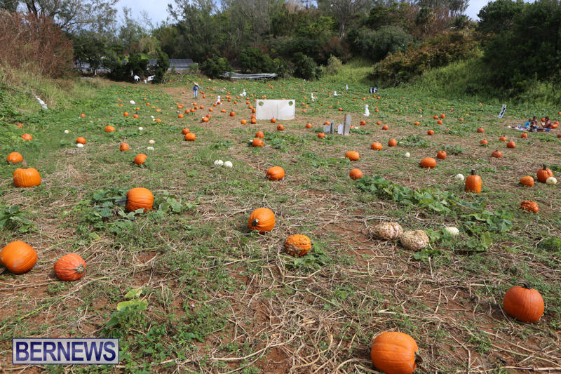 JJ-Produce-Pick-Your-Own-Pumpkins-Bermuda-October-23-2015-25