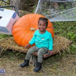 J&J Produce Pick Your Own Pumpkins Bermuda, October 23 2015-39