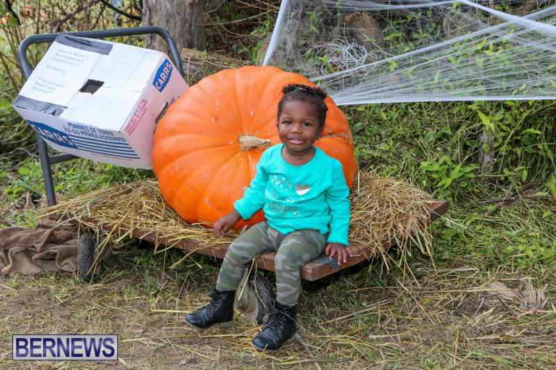 JJ-Produce-Pick-Your-Own-Pumpkins-Bermuda-October-23-2015-39
