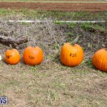 J&J Produce Pick Your Own Pumpkins Bermuda, October 23 2015-4
