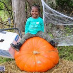 J&J Produce Pick Your Own Pumpkins Bermuda, October 23 2015-40