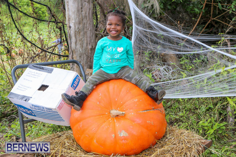 JJ-Produce-Pick-Your-Own-Pumpkins-Bermuda-October-23-2015-40
