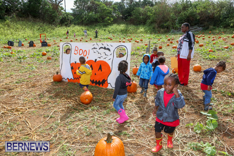 JJ-Produce-Pick-Your-Own-Pumpkins-Bermuda-October-23-2015-46