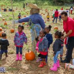 J&J Produce Pick Your Own Pumpkins Bermuda, October 23 2015-47
