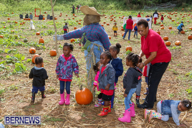 JJ-Produce-Pick-Your-Own-Pumpkins-Bermuda-October-23-2015-47