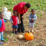 J&J Produce Pick Your Own Pumpkins Bermuda, October 23 2015-48