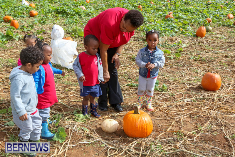 JJ-Produce-Pick-Your-Own-Pumpkins-Bermuda-October-23-2015-48