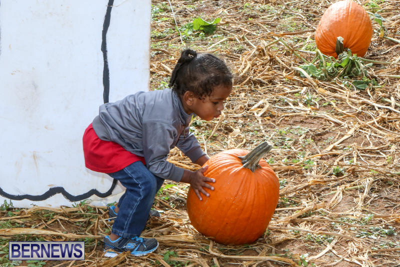 JJ-Produce-Pick-Your-Own-Pumpkins-Bermuda-October-23-2015-49