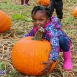 J&J Produce Pick Your Own Pumpkins Bermuda, October 23 2015-52