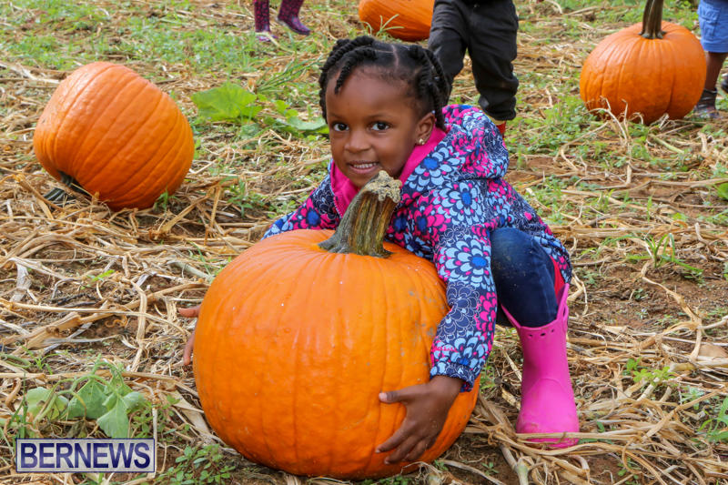 JJ-Produce-Pick-Your-Own-Pumpkins-Bermuda-October-23-2015-52