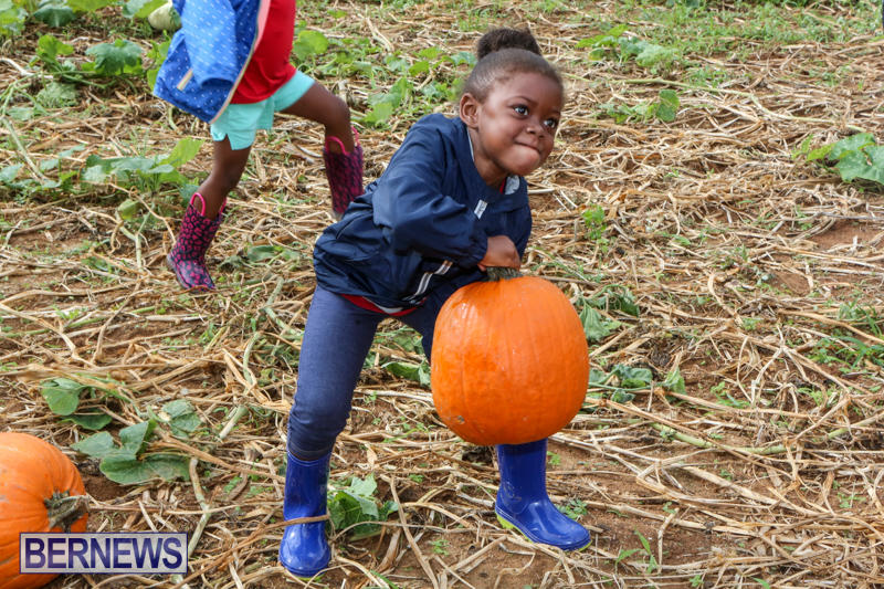 JJ-Produce-Pick-Your-Own-Pumpkins-Bermuda-October-23-2015-53