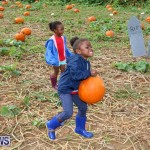 J&J Produce Pick Your Own Pumpkins Bermuda, October 23 2015-54