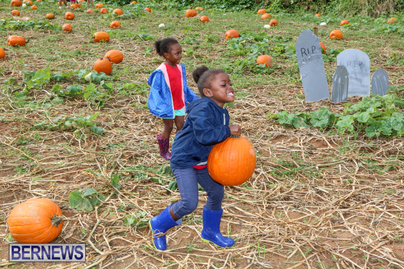 JJ-Produce-Pick-Your-Own-Pumpkins-Bermuda-October-23-2015-54