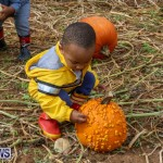 J&J Produce Pick Your Own Pumpkins Bermuda, October 23 2015-55