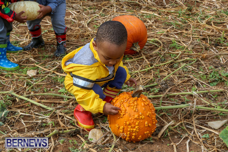 JJ-Produce-Pick-Your-Own-Pumpkins-Bermuda-October-23-2015-55