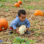 J&J Produce Pick Your Own Pumpkins Bermuda, October 23 2015-57