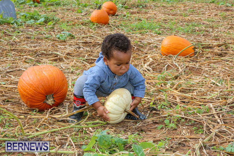 JJ-Produce-Pick-Your-Own-Pumpkins-Bermuda-October-23-2015-57