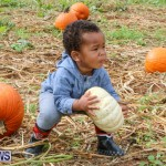 J&J Produce Pick Your Own Pumpkins Bermuda, October 23 2015-58