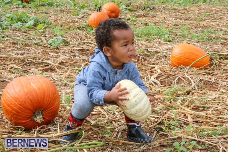 JJ-Produce-Pick-Your-Own-Pumpkins-Bermuda-October-23-2015-58