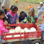 J&J Produce Pick Your Own Pumpkins Bermuda, October 23 2015-60