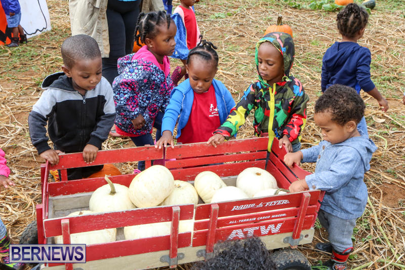 JJ-Produce-Pick-Your-Own-Pumpkins-Bermuda-October-23-2015-61