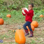 J&J Produce Pick Your Own Pumpkins Bermuda, October 23 2015-62