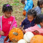 J&J Produce Pick Your Own Pumpkins Bermuda, October 23 2015-64