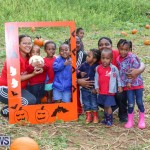 J&J Produce Pick Your Own Pumpkins Bermuda, October 23 2015-66