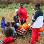 J&J Produce Pick Your Own Pumpkins Bermuda, October 23 2015-69